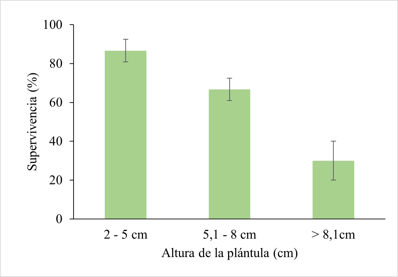 Efecto del tamaño de plántula sobre la supervivencia al trasplante de plántulas de C. officinalis L